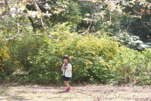 枝を集めるShico(Nikon D5500)