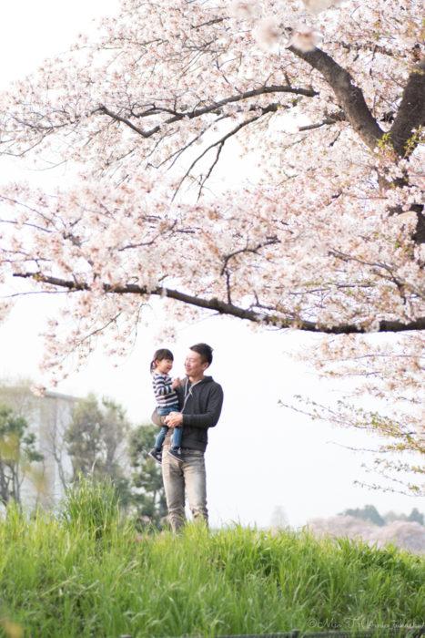 桜の下の父娘(Nikon D5500)