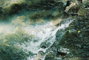 流れてる川 - Nikon F2