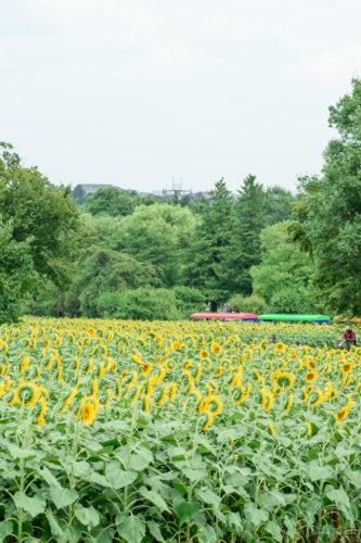花の丘のてっぺん(D5500)
