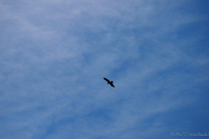 飛ぶ鳥(PEN E-PL3)