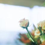 トップ画:ばらの花