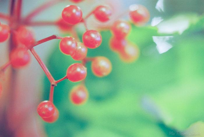 トップ画:赤い実が実る