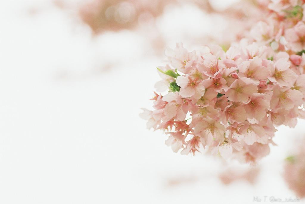 春を探して